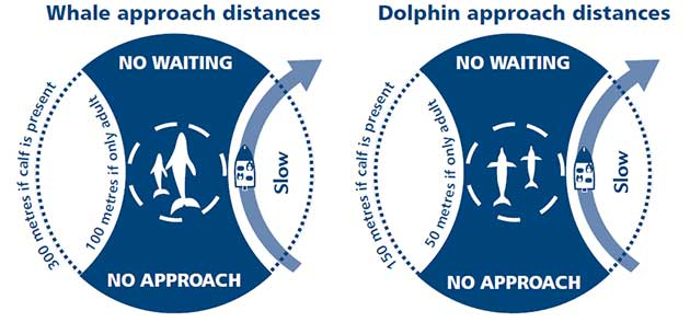 Diagram of whale and dolphin approach distances as explained in the text