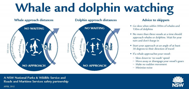 Whale and dolphin watching distance off sticker