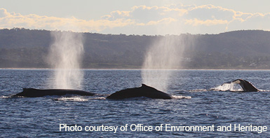 From June to December Whales will be in greater abundance off the NSW coast, so be sure to navigate