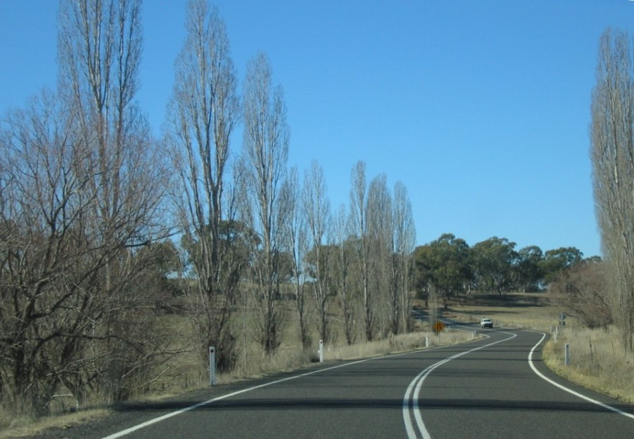 The road curves between rows of trees on the Oxley Highway, with a car in the distance