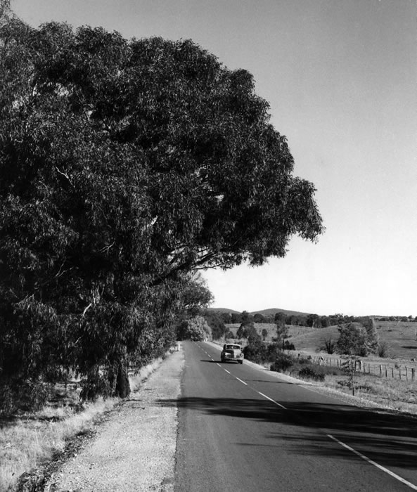 Autumn foliage in the shire of Gunning, Hume Highway, looking towards Yass [May 1949]