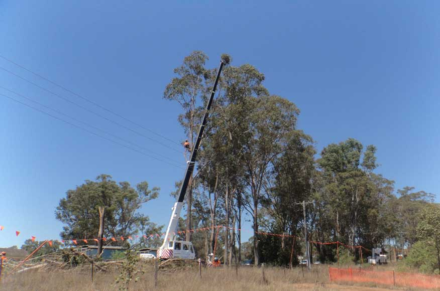 Tree removal within the vicinity of overhead powerlines [Dec 2013]